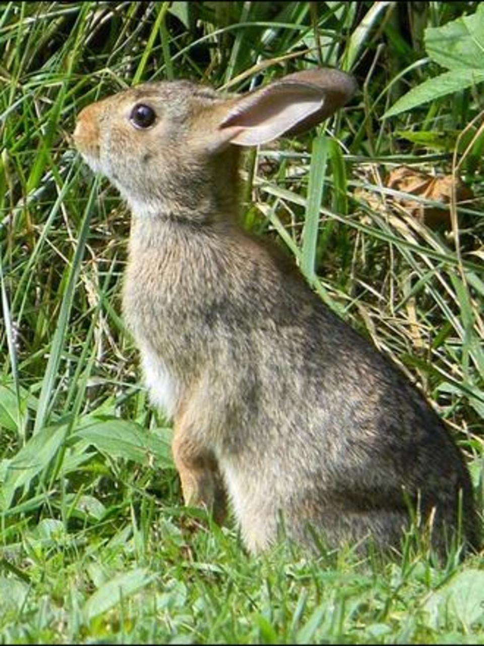 Kids And Pets Touching Wild Rabbits Can Be Deadly Wics