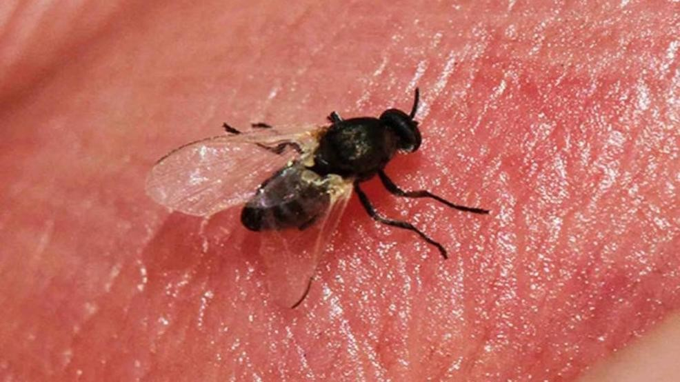 Why are gnats so bad this year? | WICS